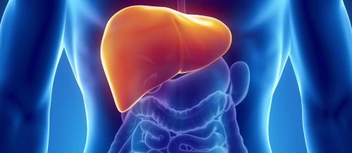 liver digestive