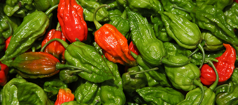 Spicy Situation: Ghost Pepper Ingestion Leads to Potentially Life